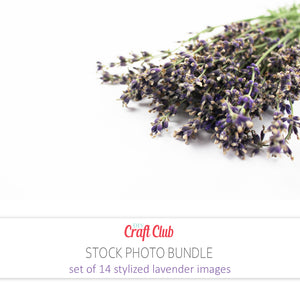 pictures of lavender for website use