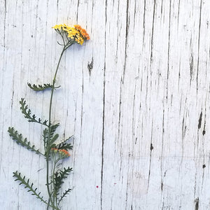 yellow flowers on wood background