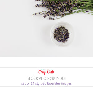stock photos of lavender commercial use