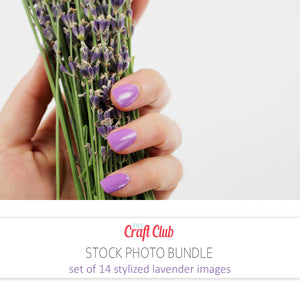 stylized lavender photos images