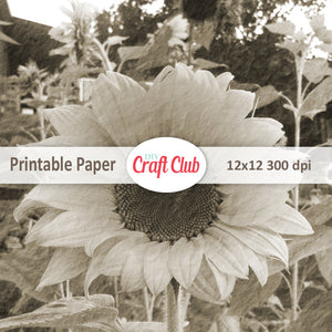 vintage sunflower printables