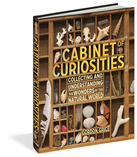 Cabinet of Curiosities Collecting and Understanding the Wonders of the Natural World