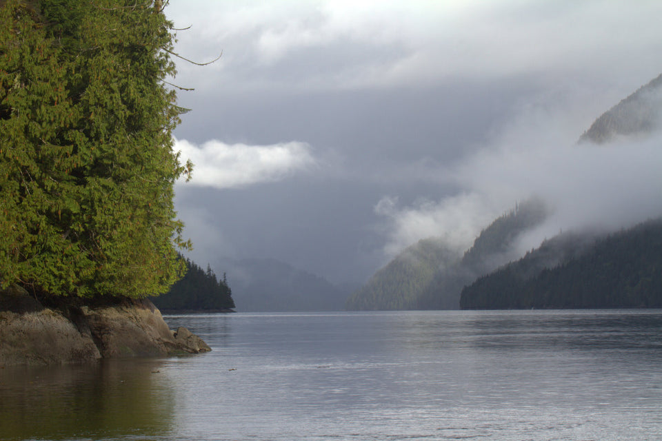 Essential Aura Great Bear Rainforest by Doug Neasloss