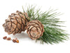 Cedarwood cones and needles