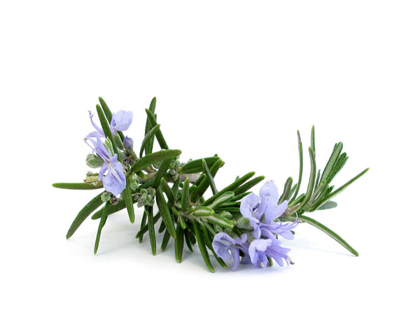 rosemary leaves and flowers