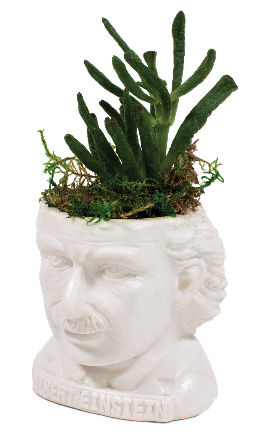 Albert Einstein Planter