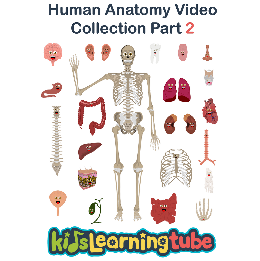 The Human Body Video Collection 2