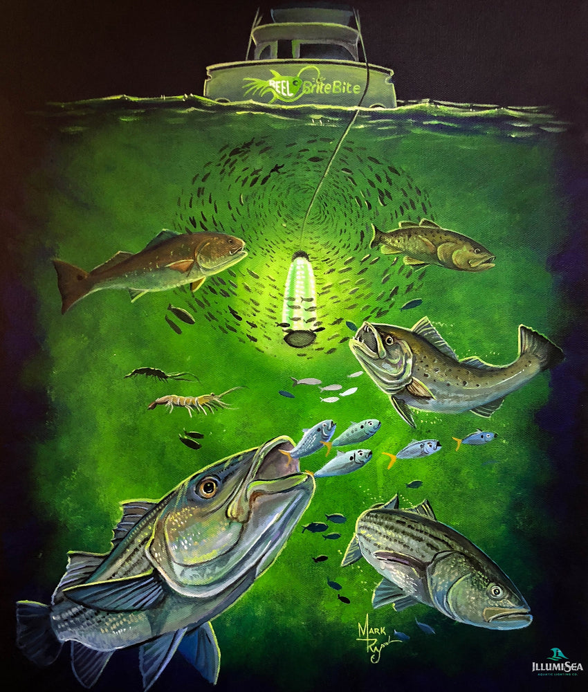 LED Fishing Lights