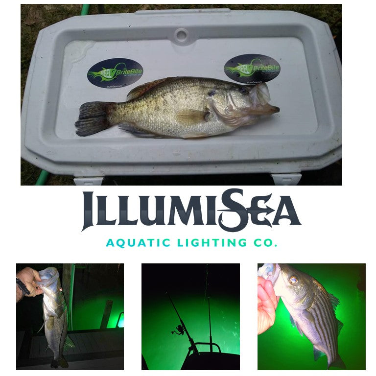 Crappie fishing lights