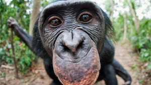 All About Apes: Interesting Facts About the Many Different Types of Primates