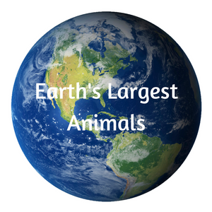 Earth's Largest Animals