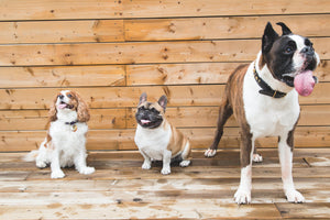Choosing the Right Dog for Your Lifestyle