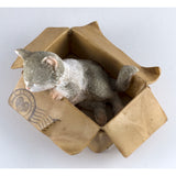Mini Gray and White Messenger Kitten Sleeping In Box Figurine 2