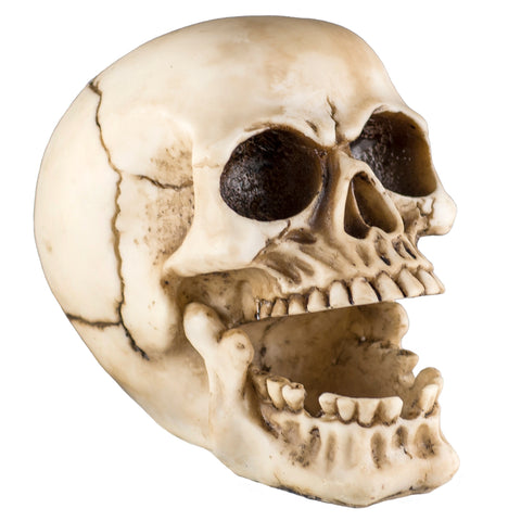 Skull Ashtray Figurine