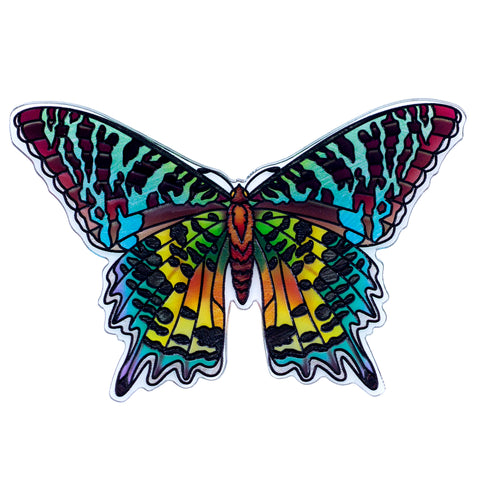 Madagascan Sunset Moth Butterfly Magnet By AMIA