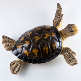 Brown Sea Turtle Statue Figurine 4
