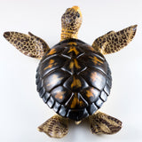 Brown Sea Turtle Statue Figurine 6