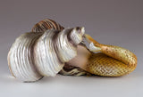 Mermaid Baby Gold Sleeping On Spiral Shell Figurine 3