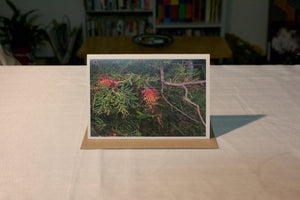 Grevillea Greeting Card