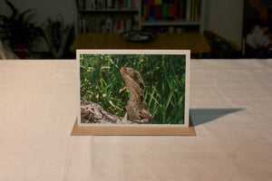 Greeting Card - Byron Bay Lizard