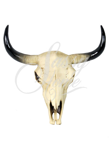 Small Bull - Ram Skull Wall Ornament - JG016