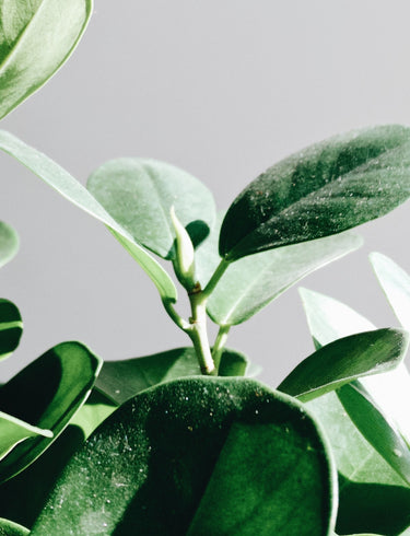 Air Purifying Plants You Can't Do Without