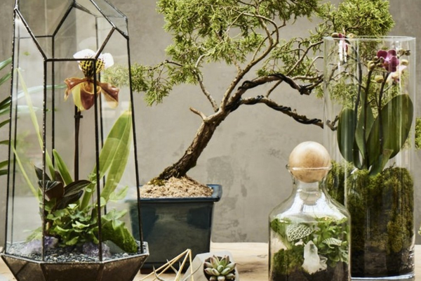 terrarium-design-workshop-mothers-day-experience