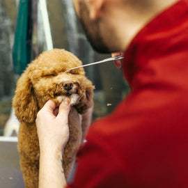 A Doggy Full Groom