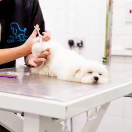 The Dog Spa - 3 Hour Premium Spa Experience
