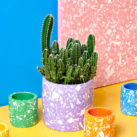 At Home: Terrazzo Plant Pot Kit