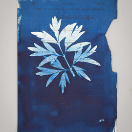 At Home: Cyanotype Prints