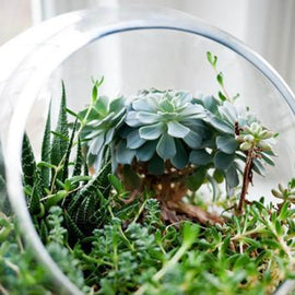 PRIVATE: Terrarium Design School
