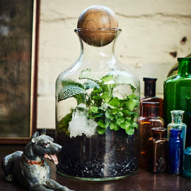 At Home: Terrarium Kit + Live Group Workshop
