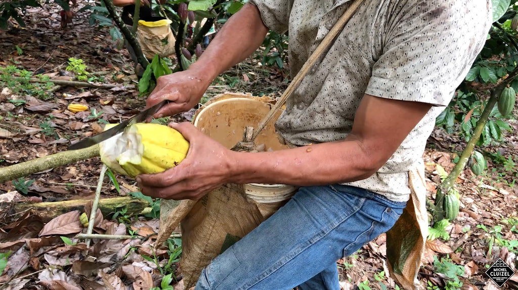 Cluizel adds 'La Laguna' in Guatemala to its Plantation Chocolate, making it Nº 7.