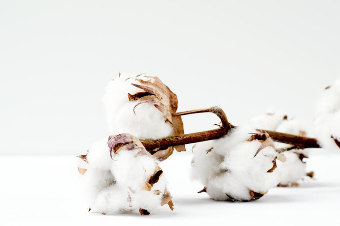 What are the health benefits of organic cotton?