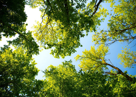 Green and yellow trees are towering above, with some light blue sky peaking through
