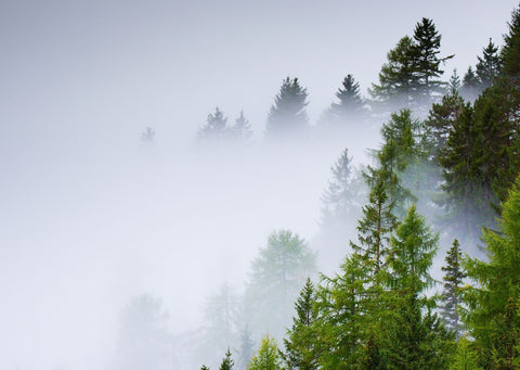 On the right of the image, there's green trees appearing through a blue-grey smoke