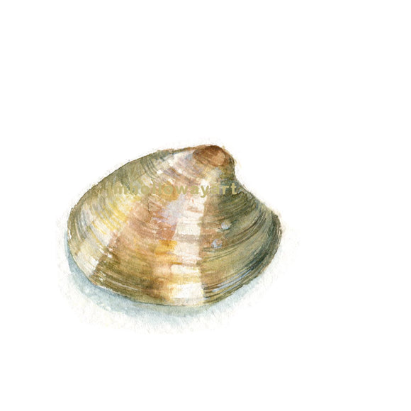 Art, Clam, Watercolor, Clam Print, Clam Shell Print, Shell Print