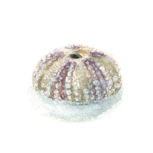 Watercolor Sea Urchin, Sea Urchin Print, Sea Urchin Art