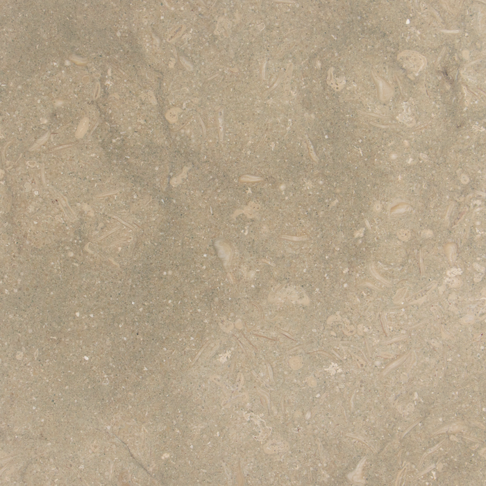 "Seagrass Limestone Travertine Floor and Wall Tiles Honed / 18"" x 18"" - DW TILE & STONE - Atlanta Marble Natural Stone Wholesale Stone Supplier"