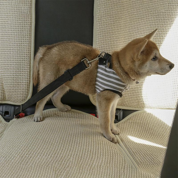 Adjustable Dog Car Seatbelt