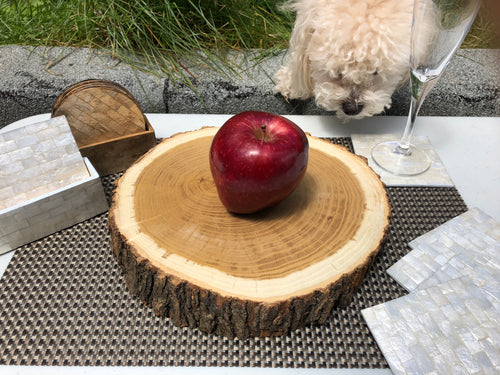 Toona Wood Log Slice Tray, Party Decor, Wine Glass Tray, Wedding Cake Stand, Wall Decoration