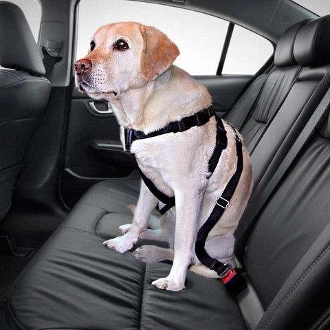 DealsChampion Black / M Amazing Pets Car Safety Seat Belt