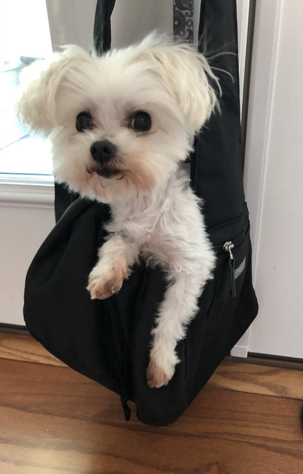 Daidy the maltese happy in sling carrier