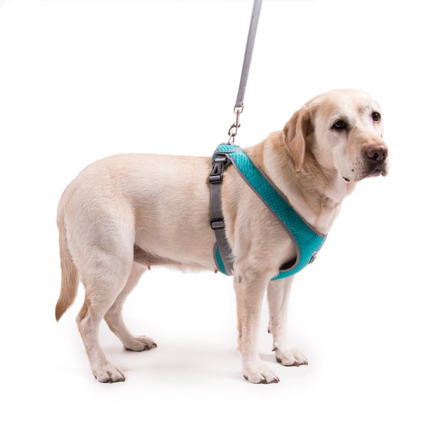 My Canine Kids | Cloak and Dawggie Dog Harness Large Dogs over 50 lbs Reflective Mesh