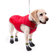 8800 Dog Socks - All Size Dogs