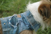 Dog modeling Authentic Denim Jean Jacket 4850 Cloak and Dawggie