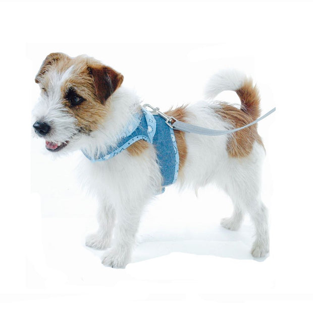 Dog wearing denim harness 4900 Cloak and Dawggie