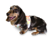 Step n Go Harness Floral Print Harness on Doxie