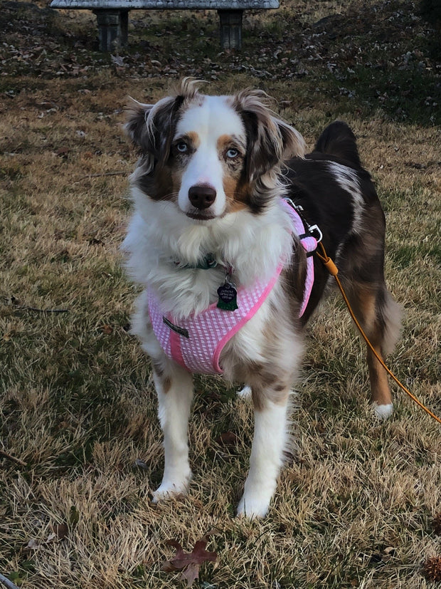 Jasmine modeling the gingham harness